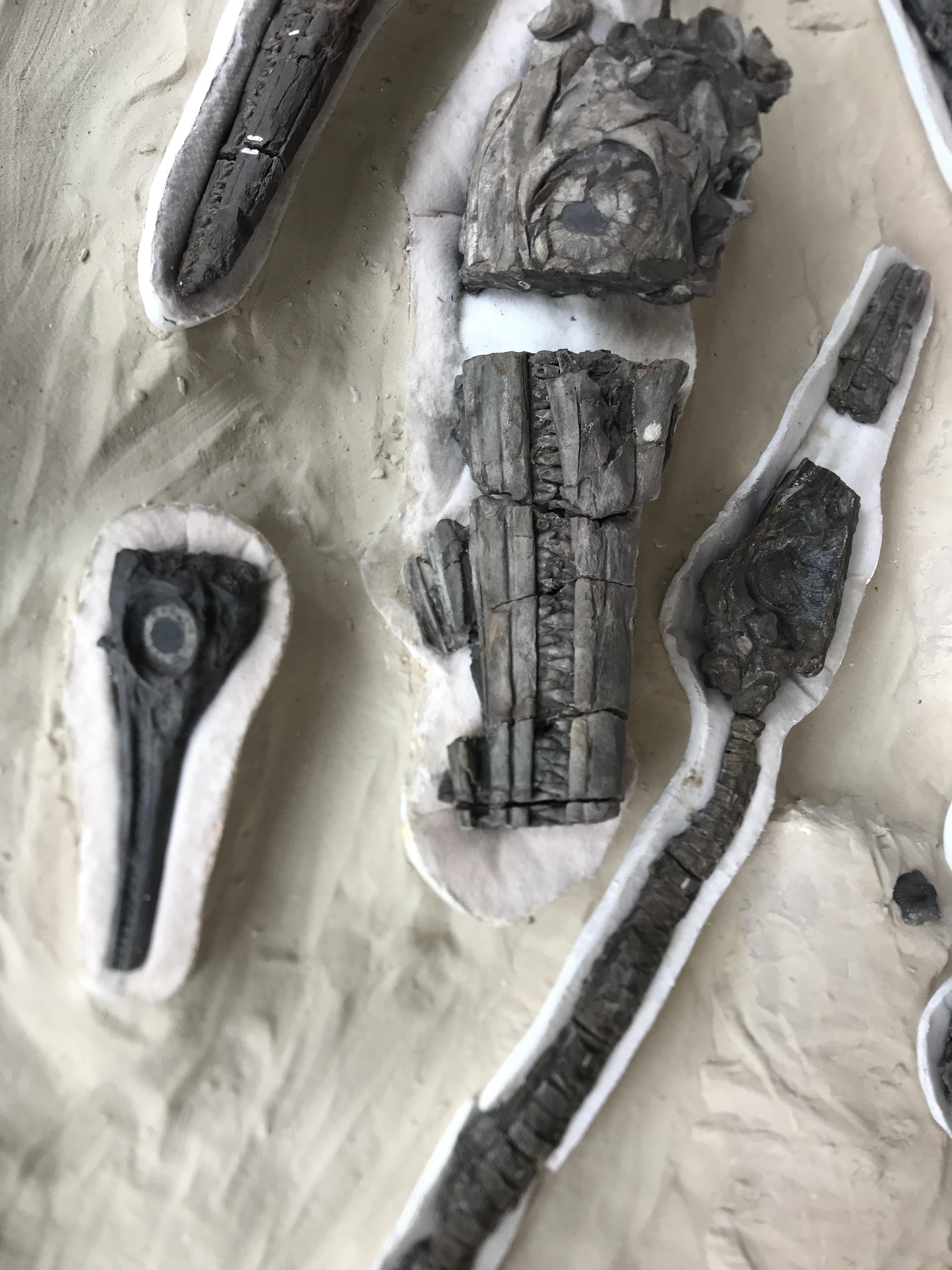 villa de leyva fossil fish.jpg