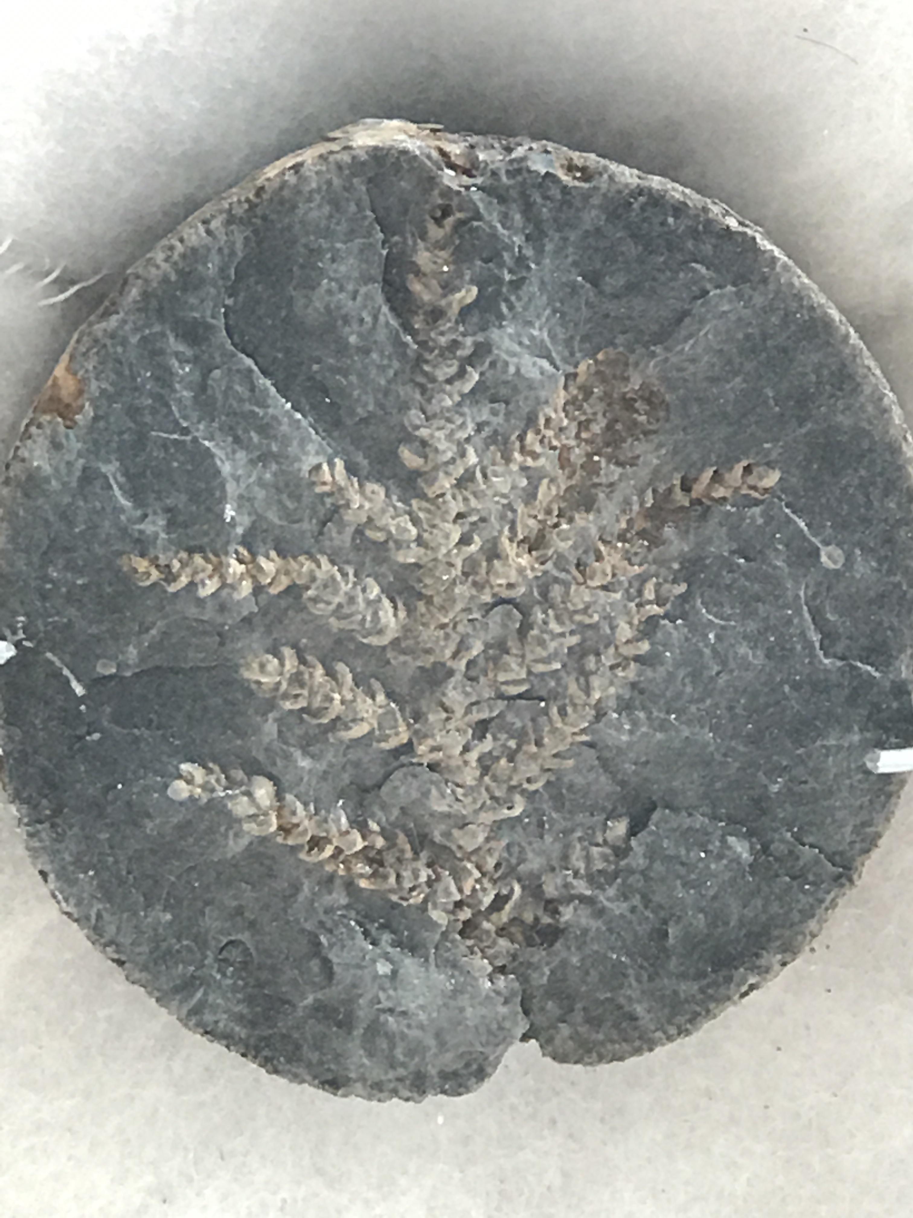 villa de leyva fossil leaf.jpg