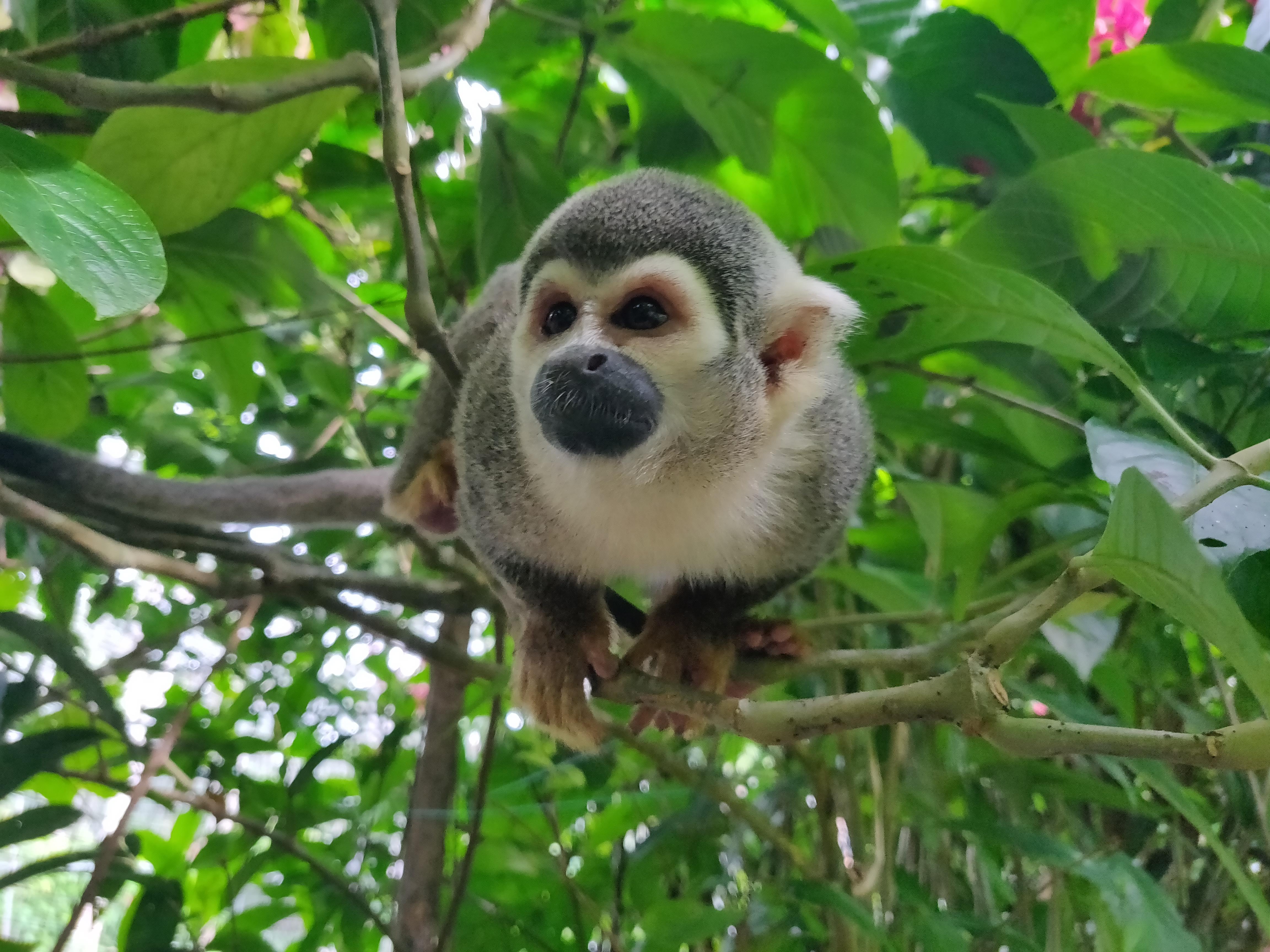 puyo monkey.jpg