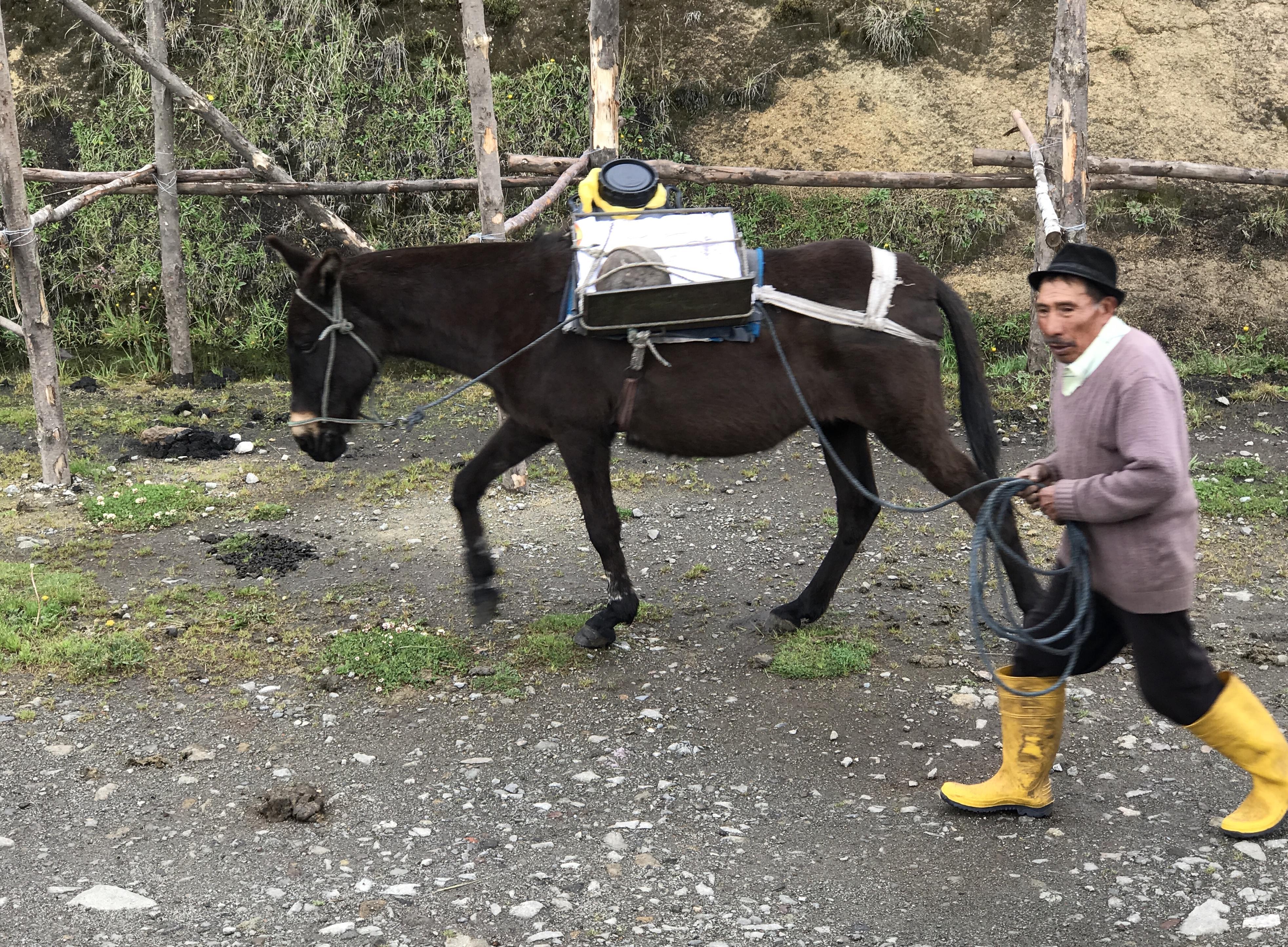 salinas cheese mule with milk.JPG