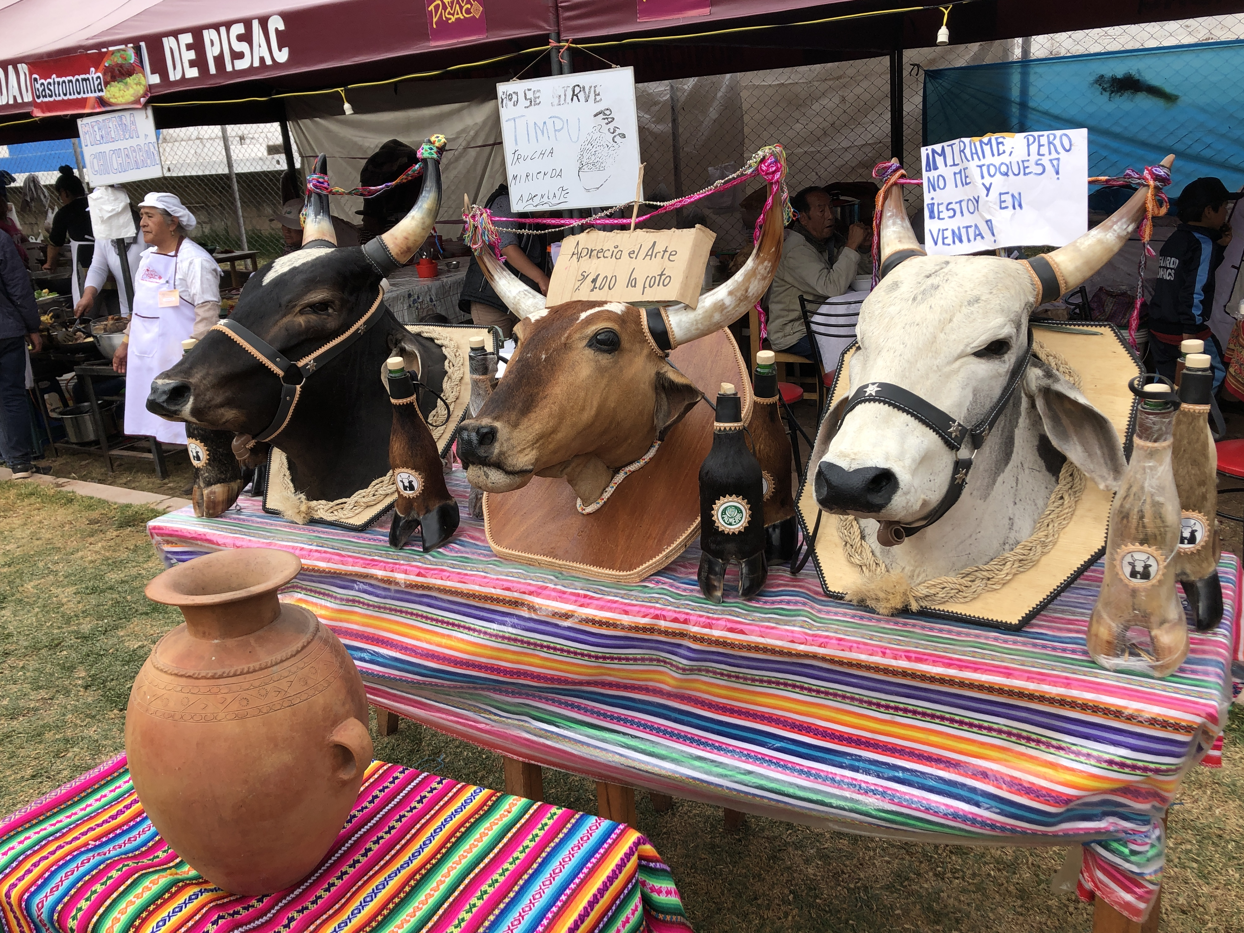 cows heads for sale.JPG