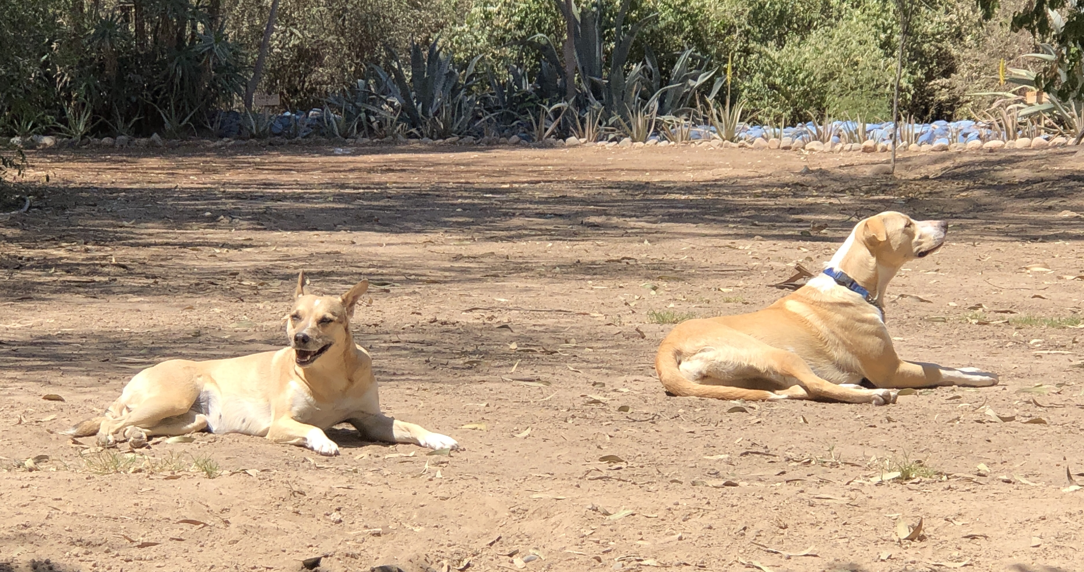 camp near nasca dogs