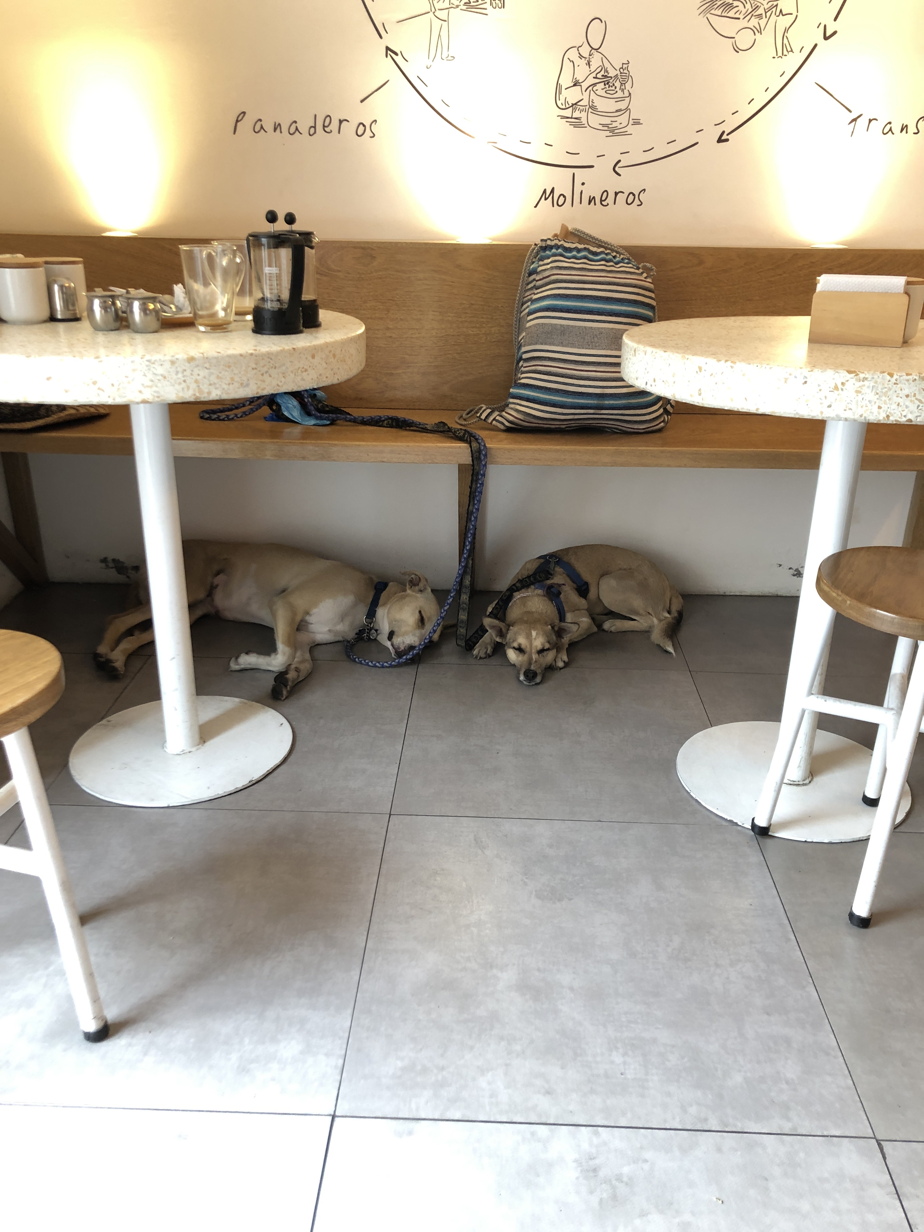dogs in a restaurant
