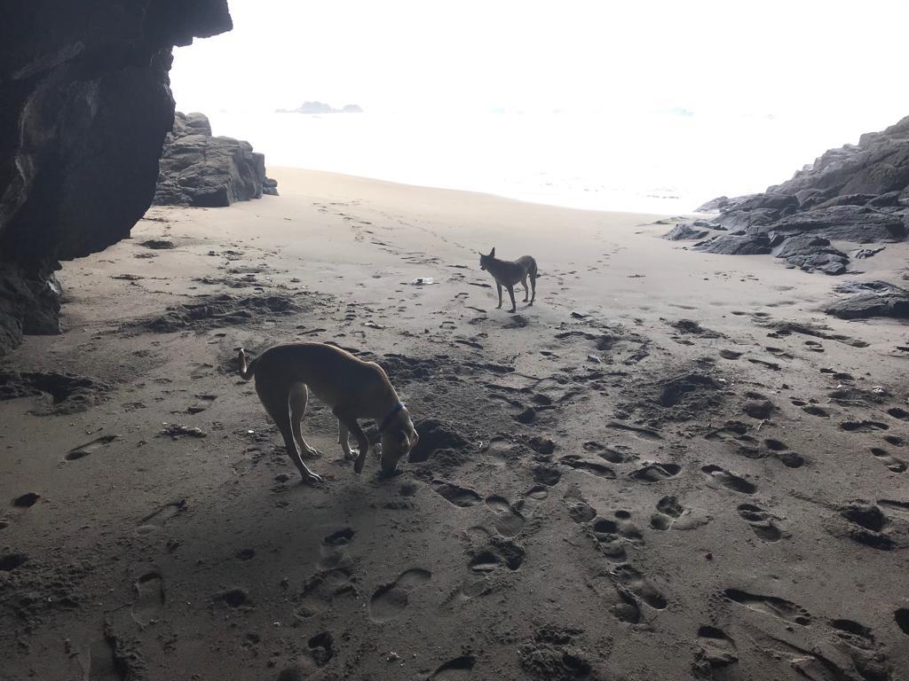 dogs in ocean cave
