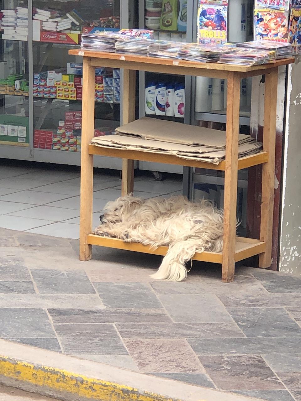 market dog sleeping.