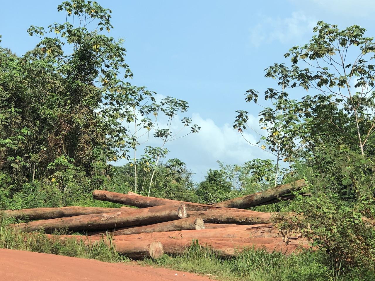 jungle logs