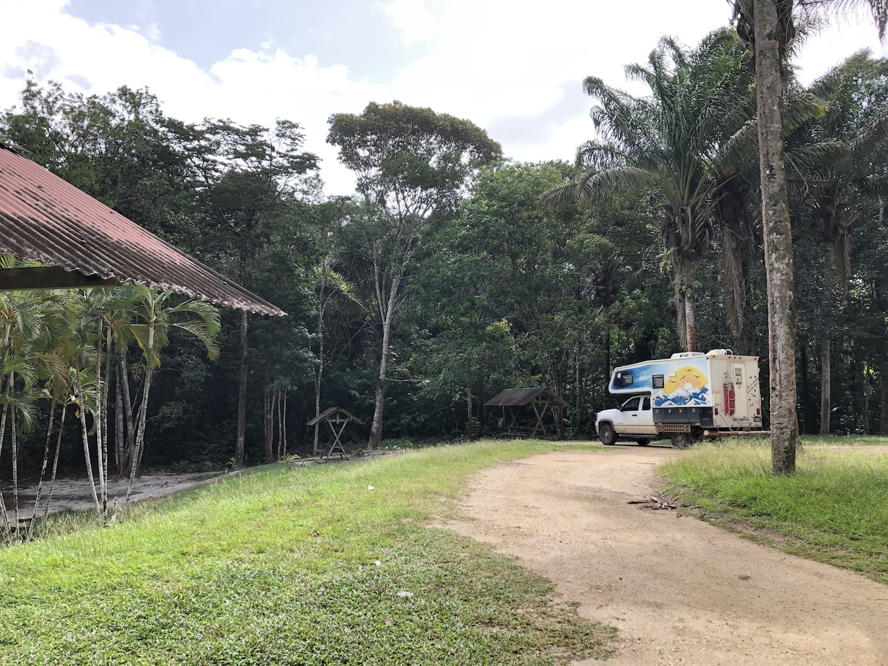 campsite palms