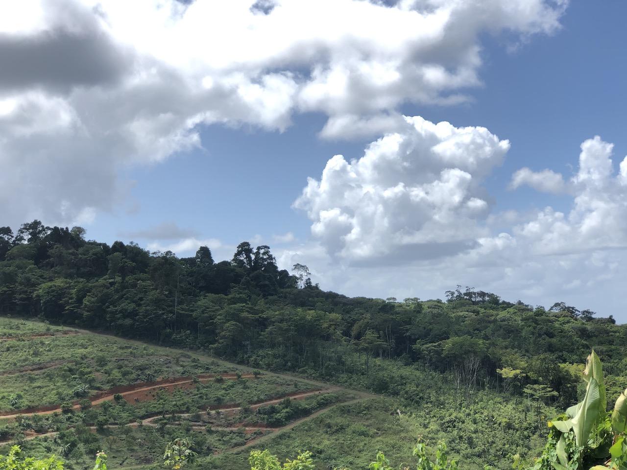 jungle view.JPG
