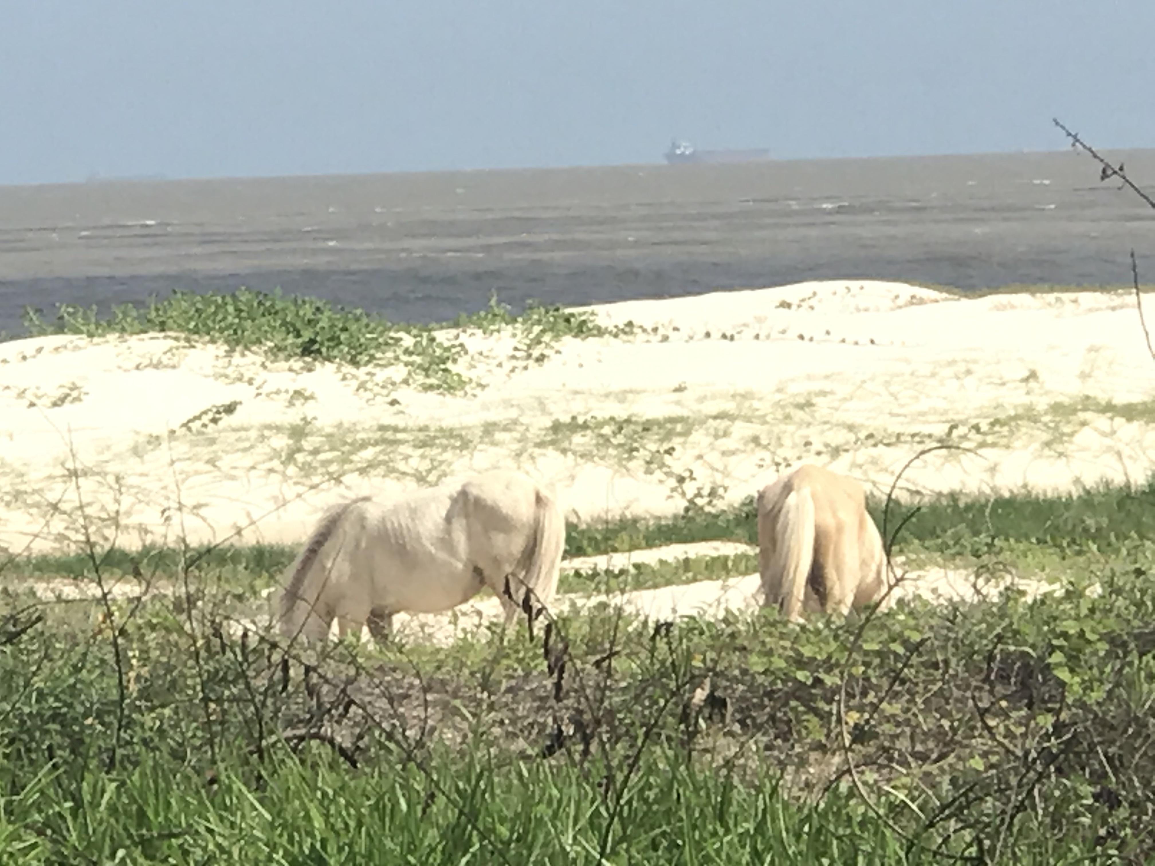 beach horses.jpeg