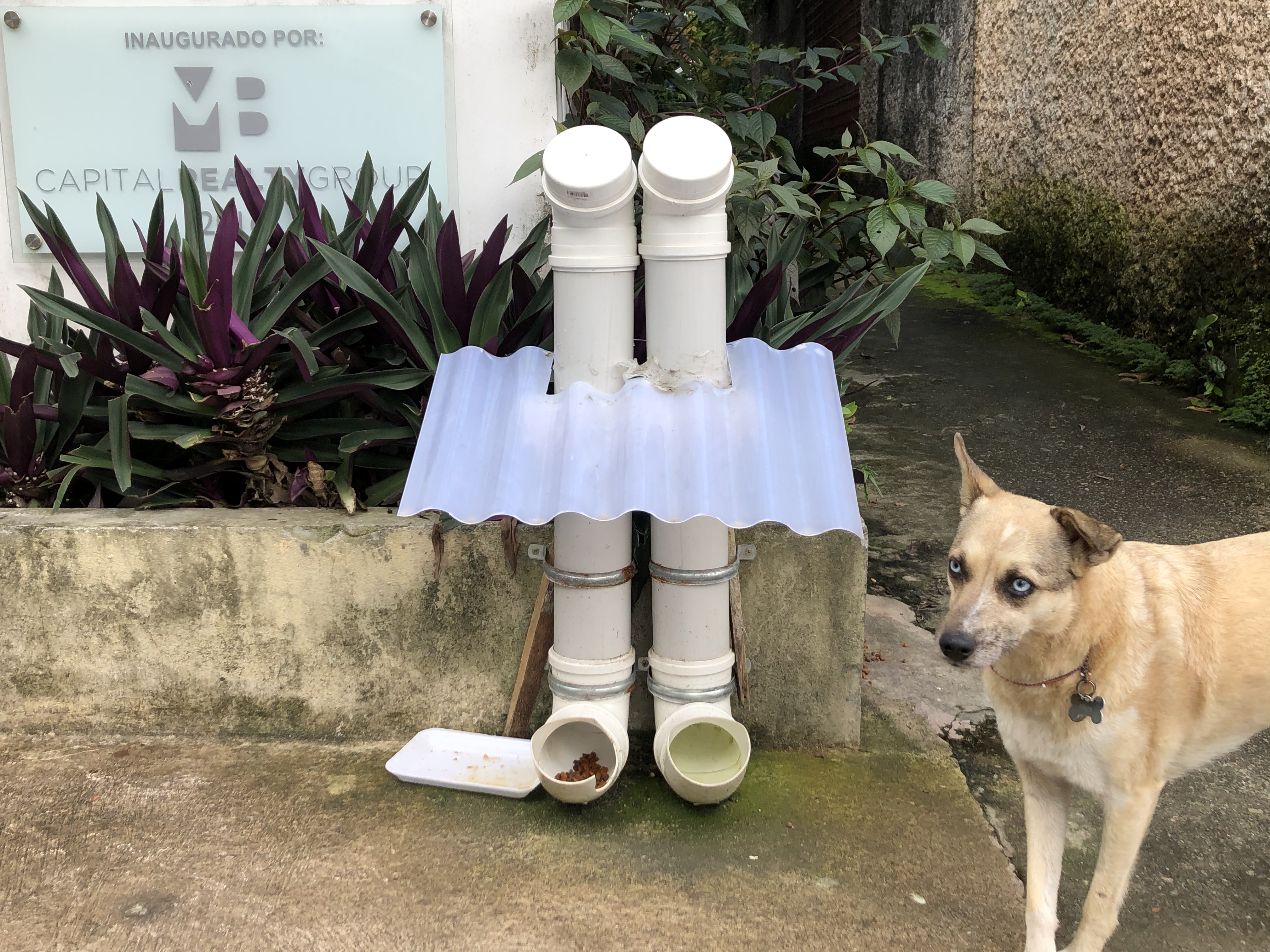 city street dog feeder station.jpeg